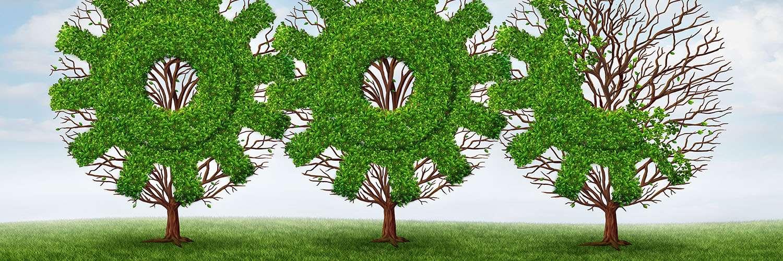 parliamentarian greens mp