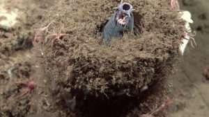 hagfish scary bugs