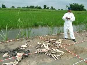 Forensic animal body farm