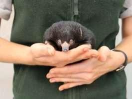 Animal science jobs Taronga Zoo University of Sydney