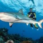 It's Shark Week! Build a career in shark conservation