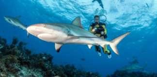 Shark conservation